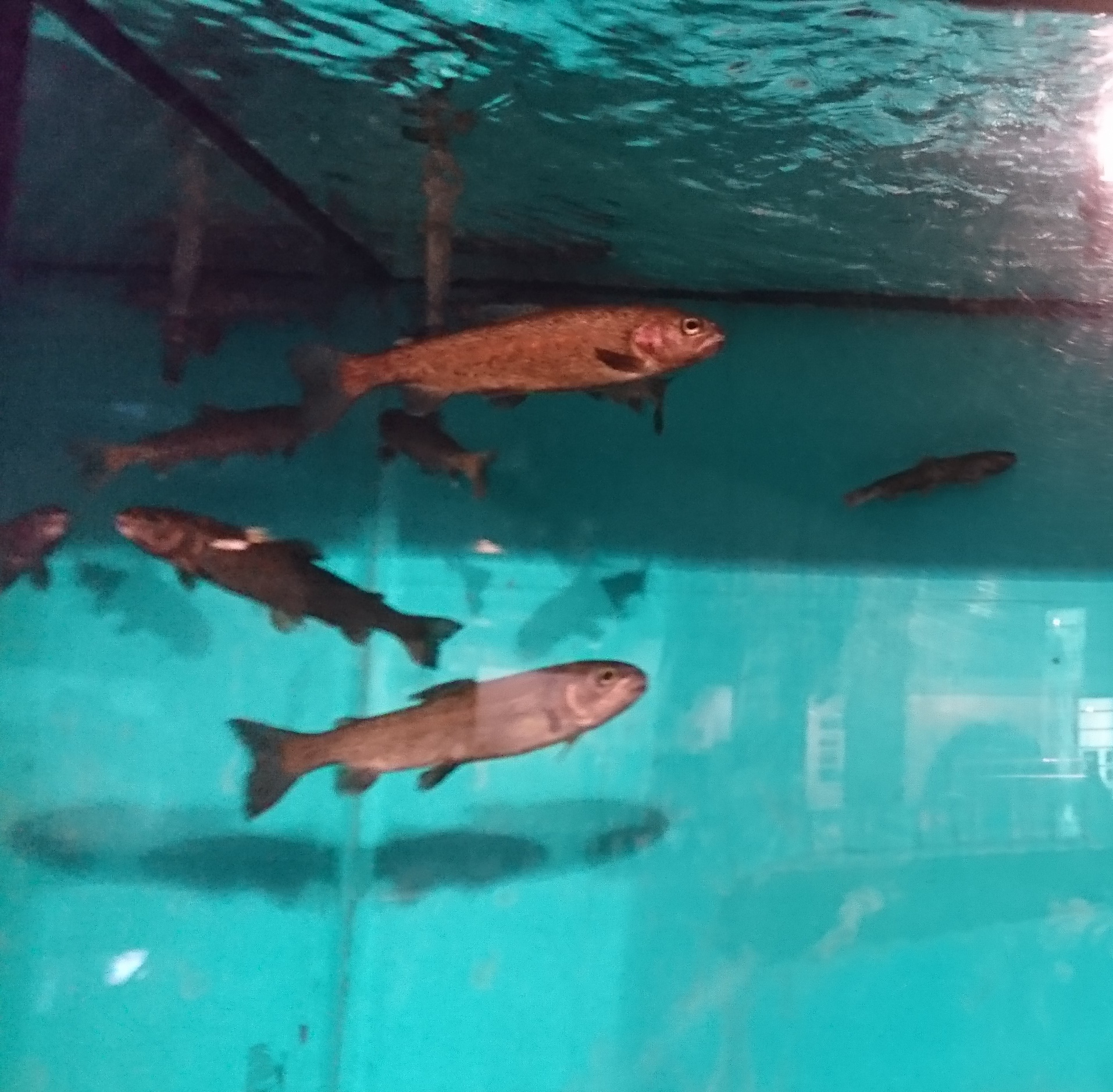 釧路市湿原展望台の展示室