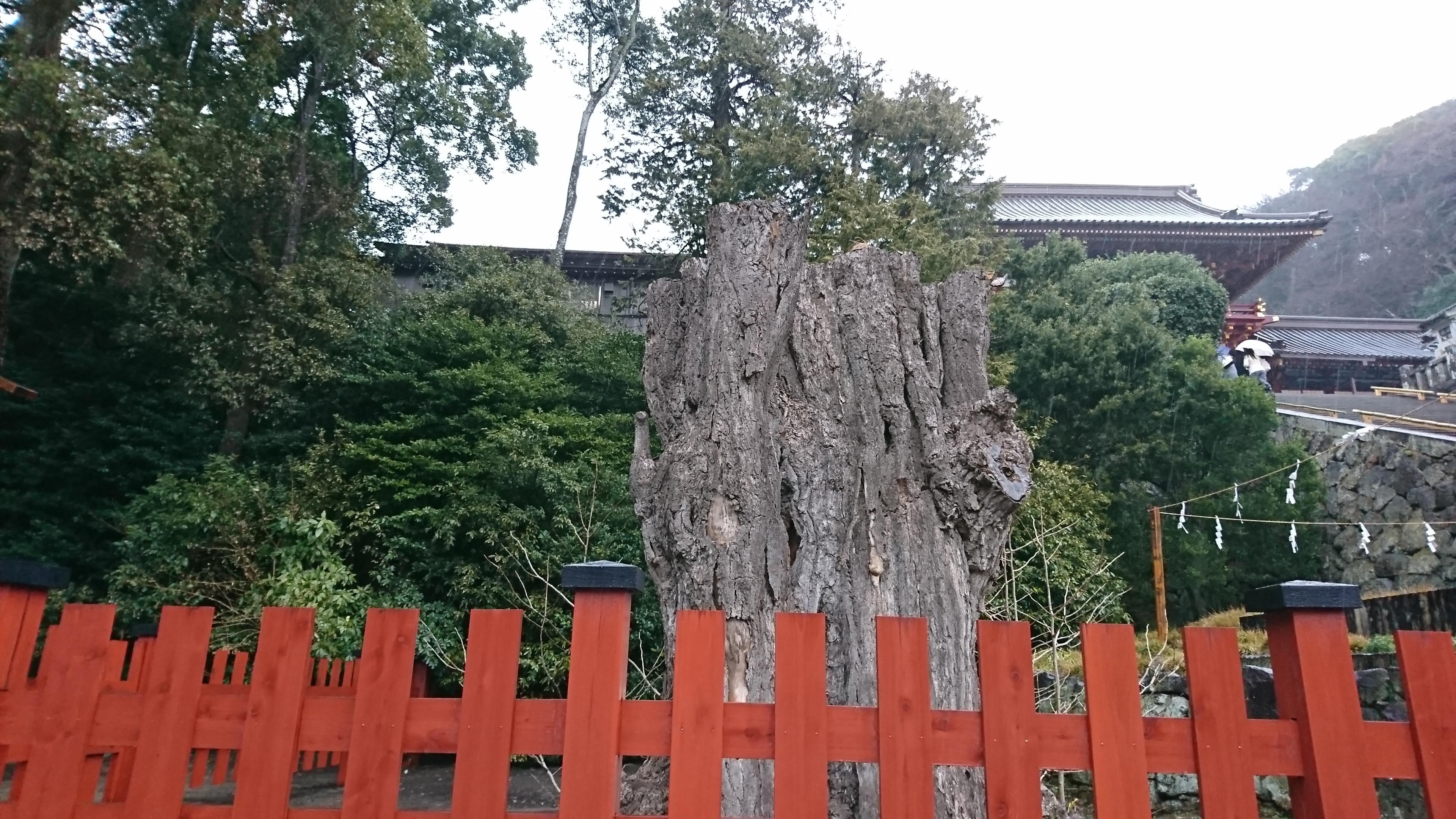鶴岡八幡宮の復縁スポット大イチョウ