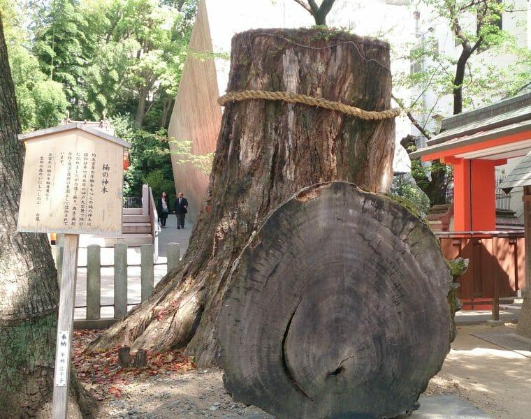 生田神社の復縁のパワースポットの楠の神木