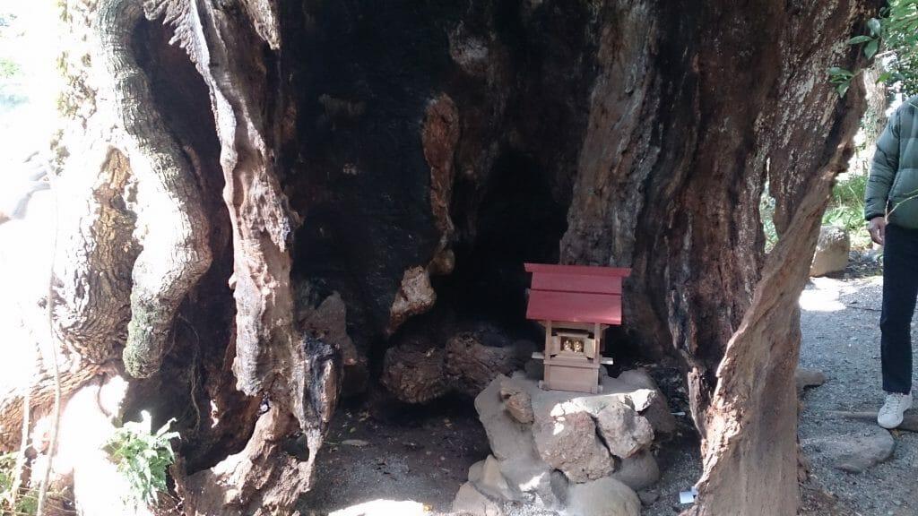 来宮神社の御神木第二楠木