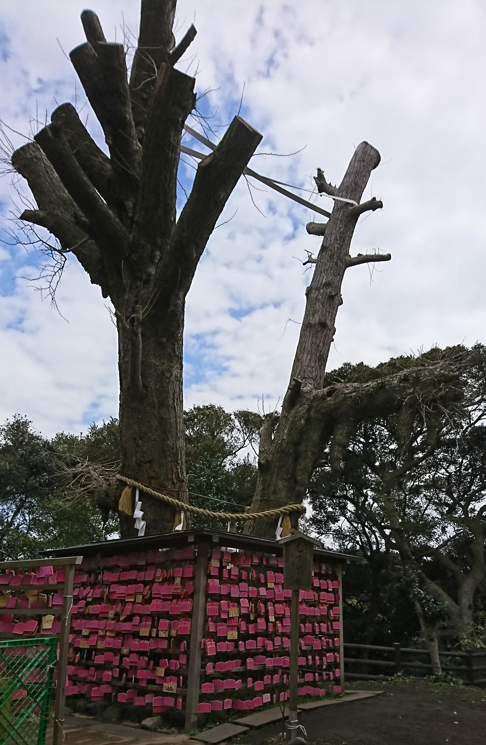 江ノ島神社のむすびの木