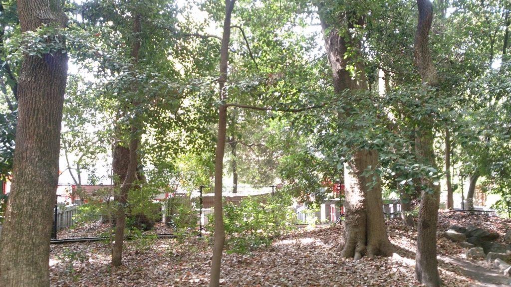 生田神社のパワースポット生田の森