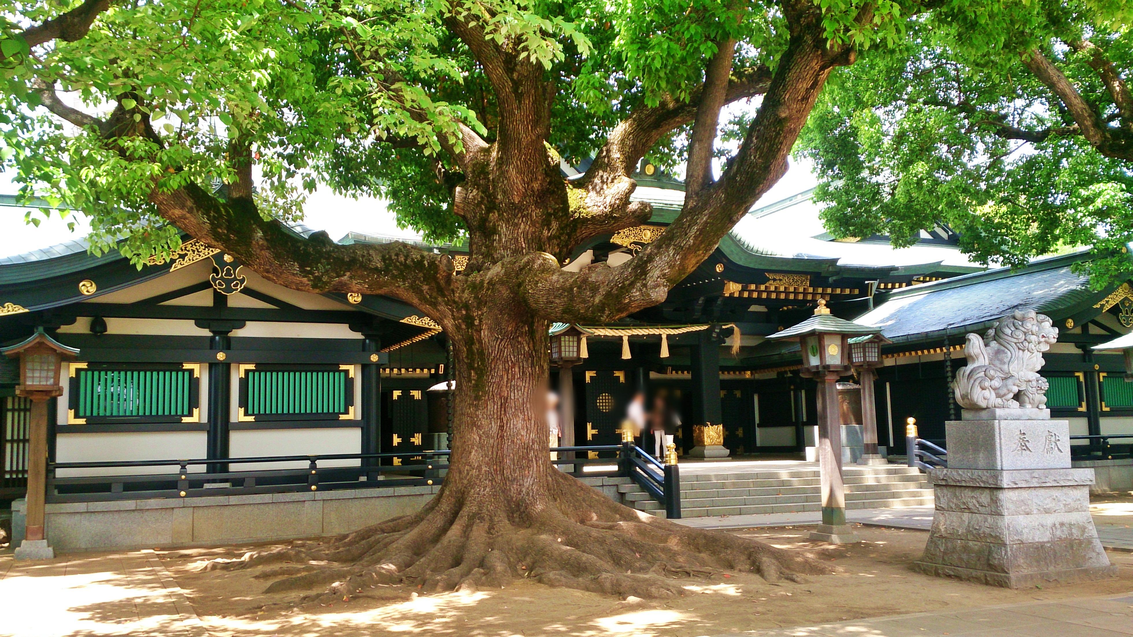 穴八幡宮の金運アップの根上げの木