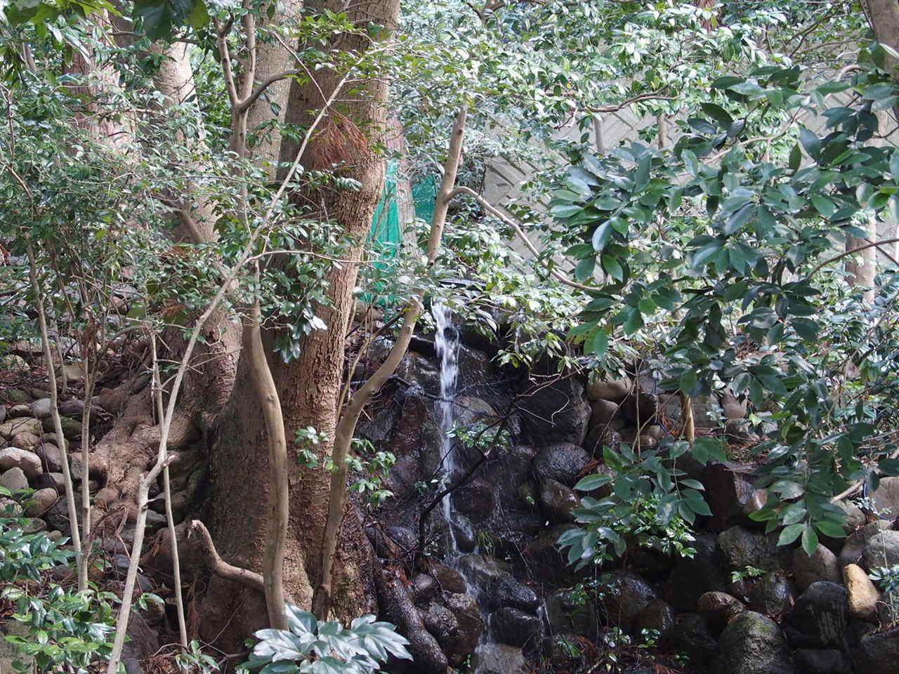 金沢の石浦神社の境内の御神池と湧水