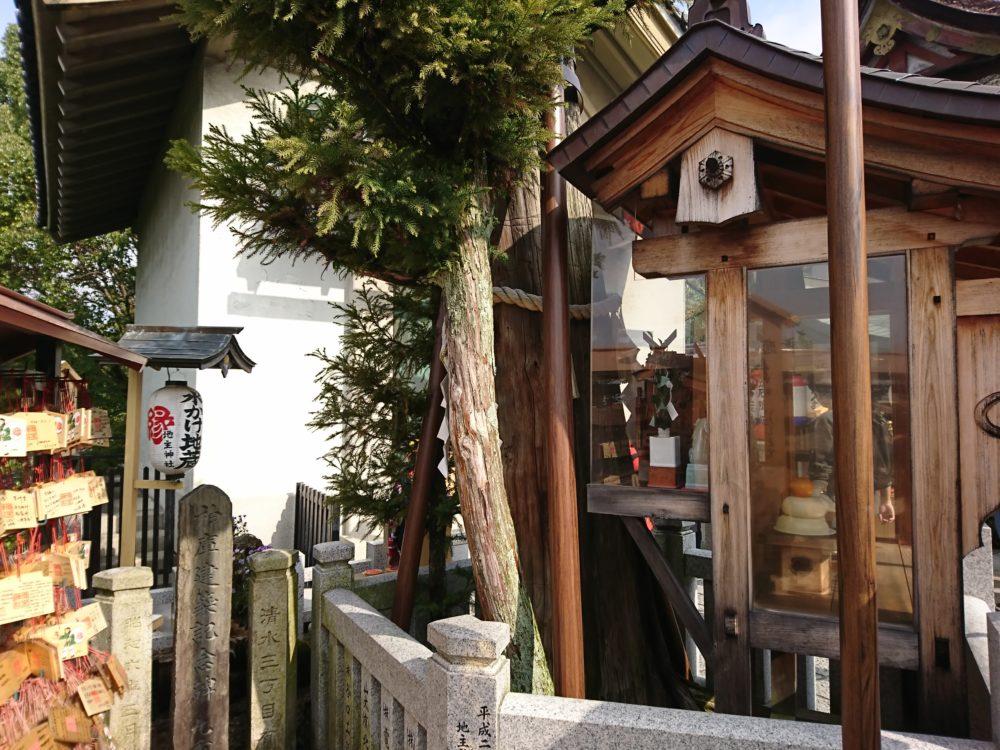 清水寺の地主神社にあるいのり杉