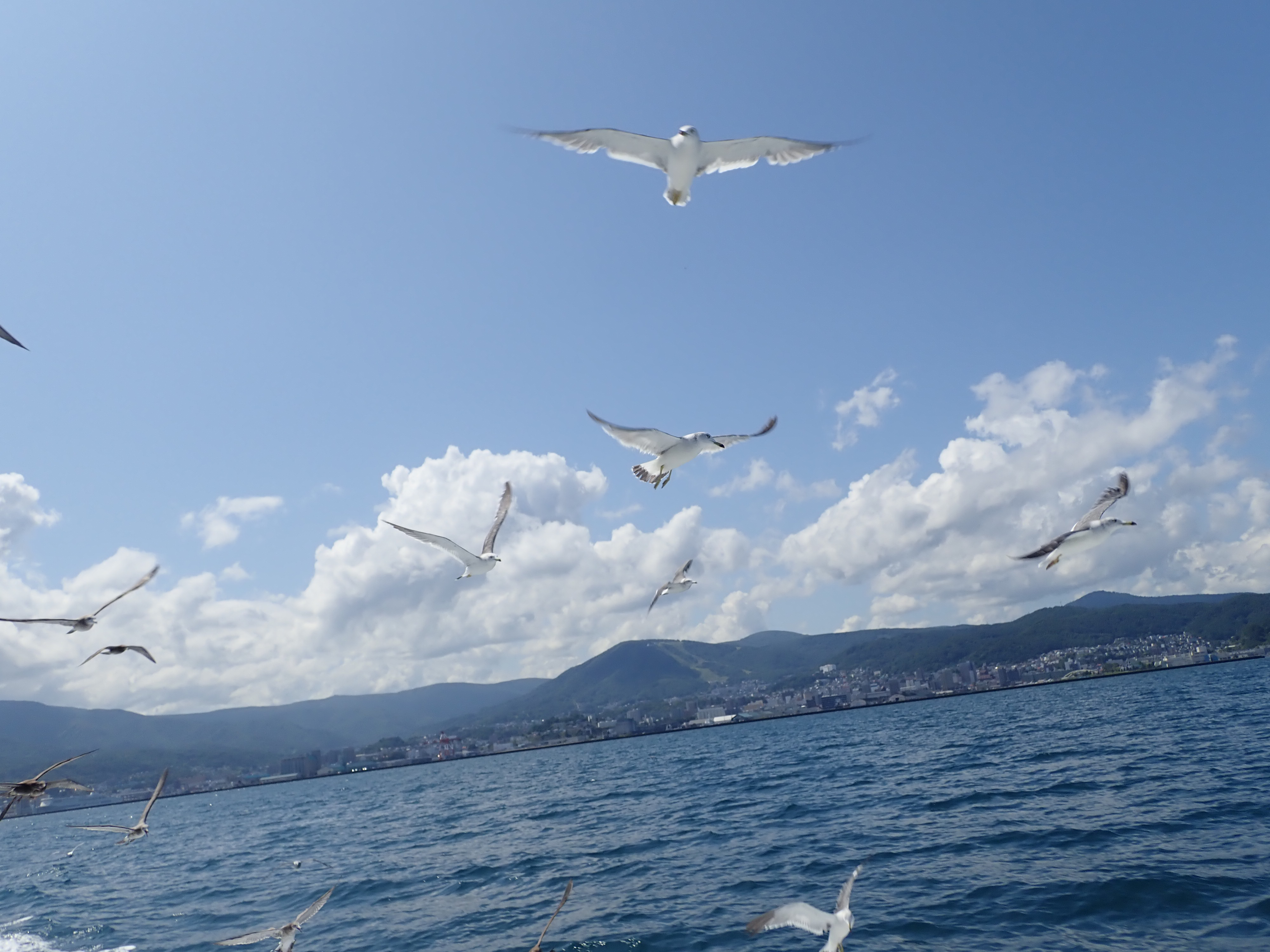 小樽海上観光船