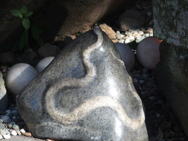 白蛇は弁財天様のお使いとして金運アップのご利益で知られる