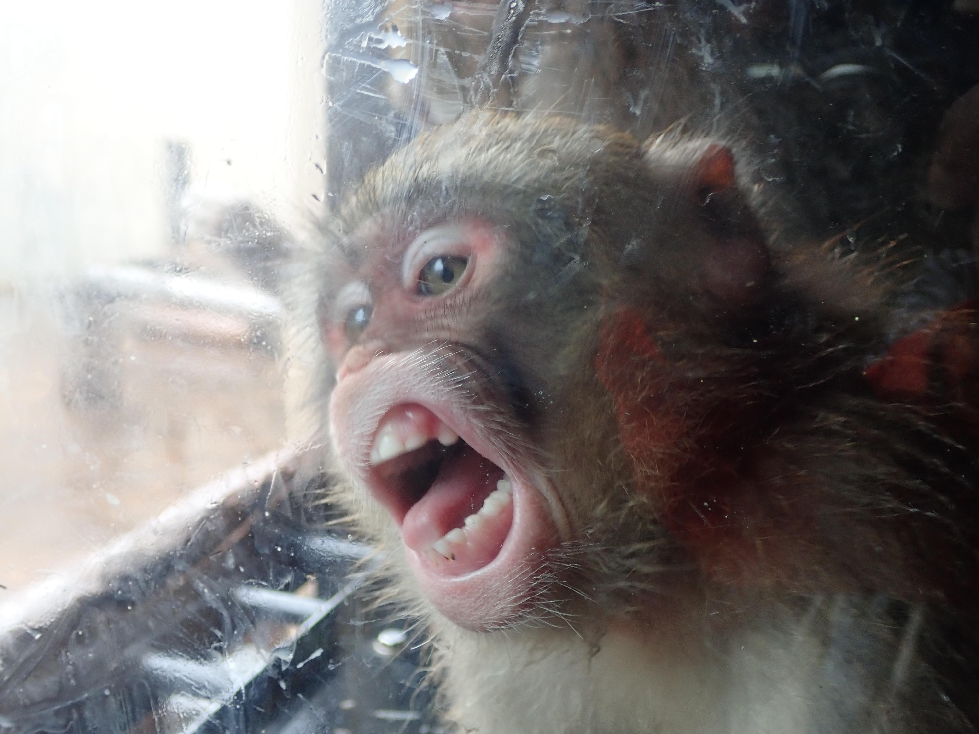 旭山動物園の猿