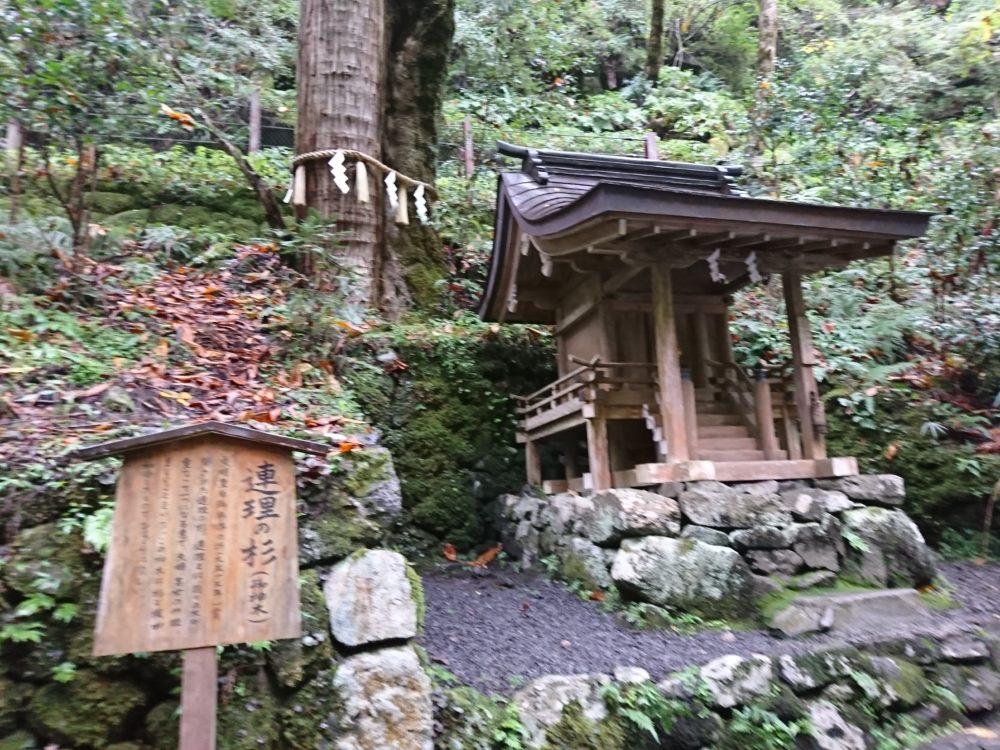 貴船神社・奥宮にある連理の杉