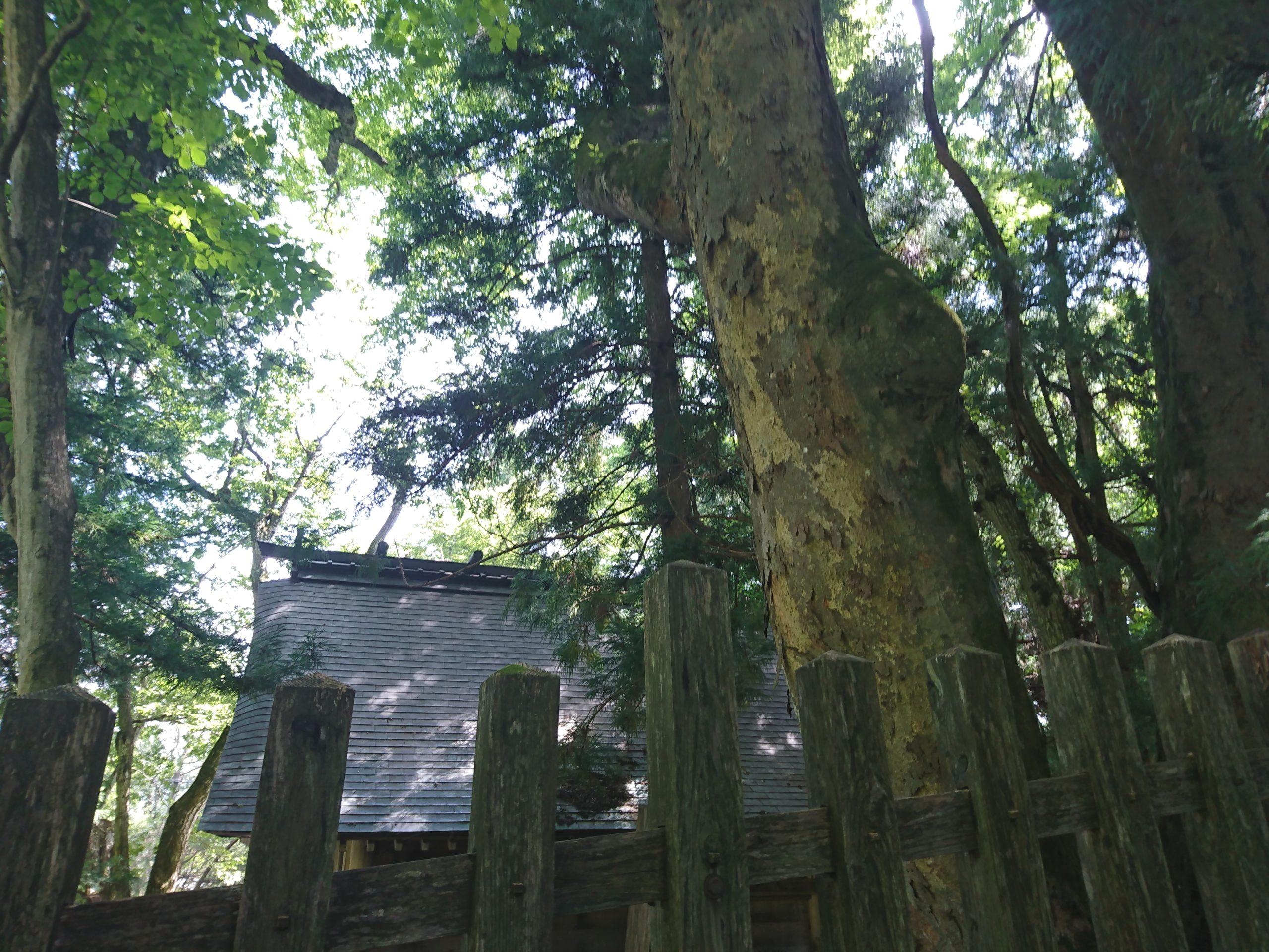 諏訪大社上社前宮ご本殿を後ろから見たところ