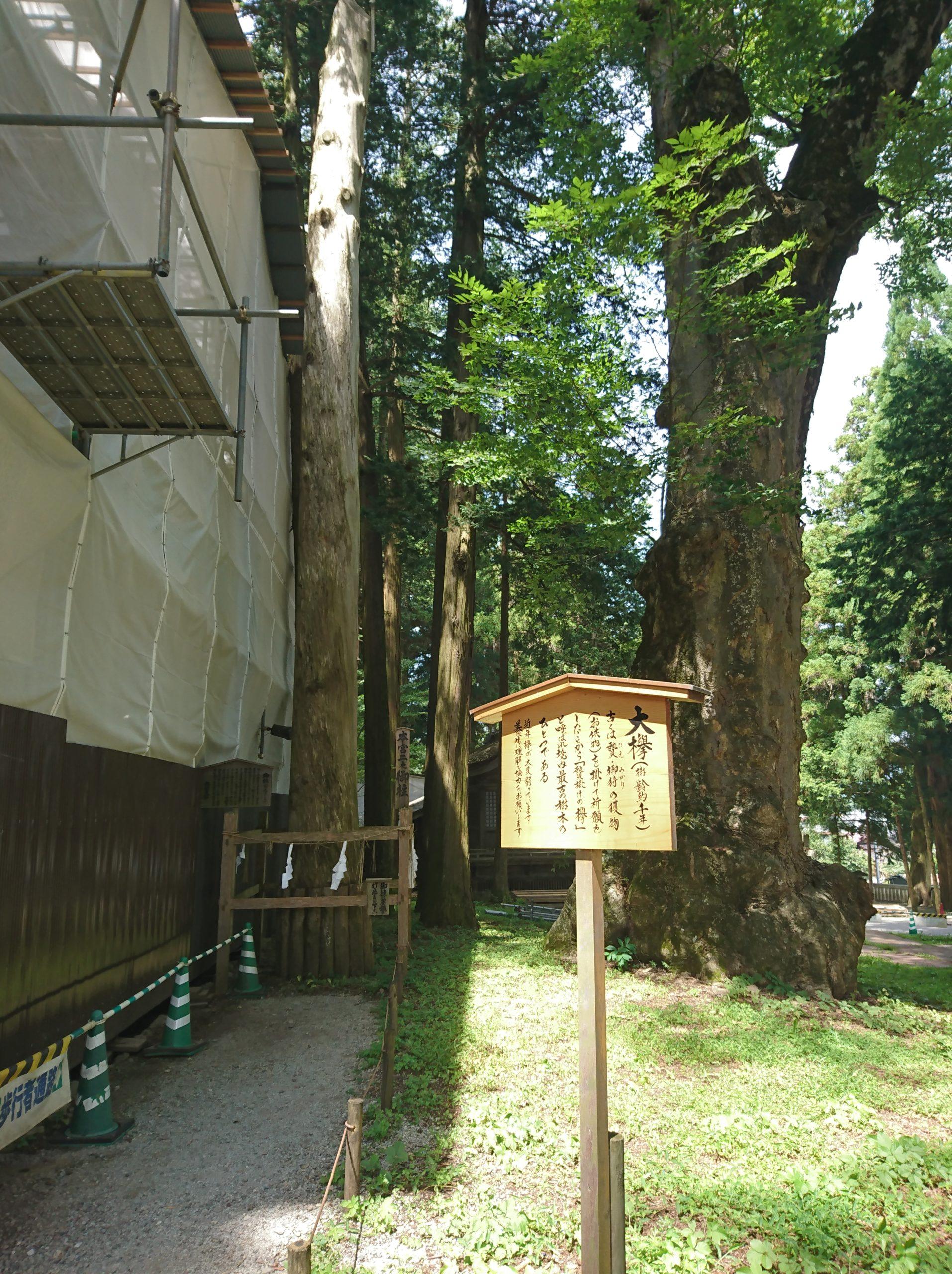 諏訪大社上社本宮の二之御柱と大欅