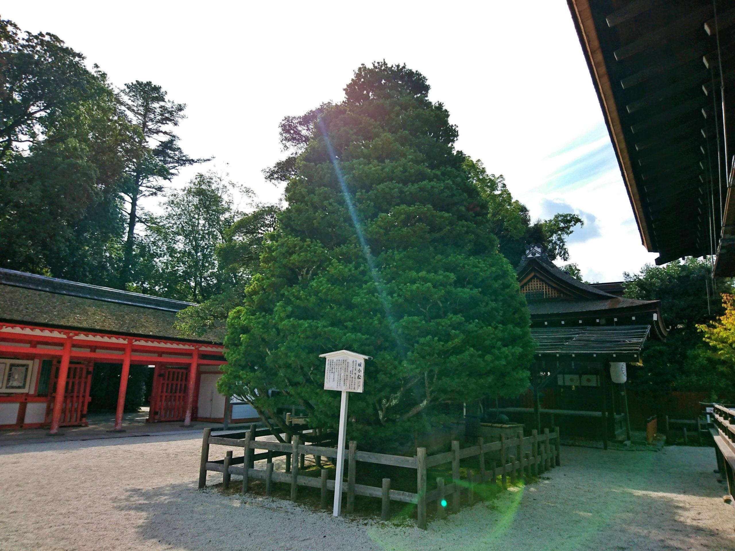 下鴨神社の媛小松